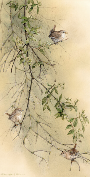 wren birds and jasmine fine art print by artist Jennifer Bell at myton gallery hull