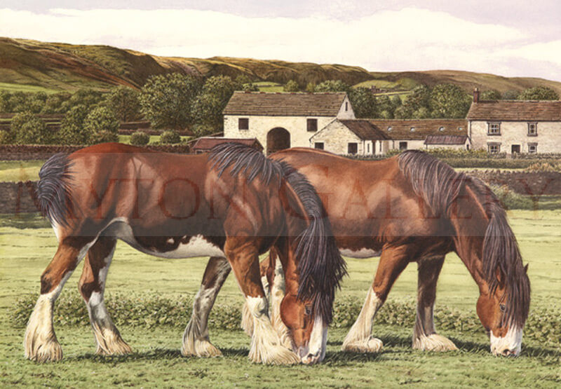 Shire Horses in a Field picture by artist Ron Spoors